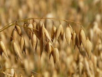 Foligno, valorizzazione prodotti agricoli, bando prorogato al 15 marzo