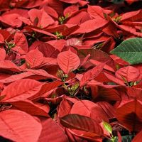 A Bevagna la magia della tradizione rivive a Natale