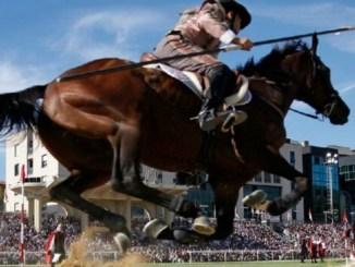 Quintana, morte cavallo, 11 avvisi di garanzia per maltrattamento di animali