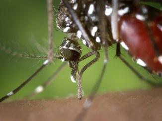 Trevi, lotta alla zanzara tigre scatta l'ordinanza valida dal 1 aprile al 31 ottobre