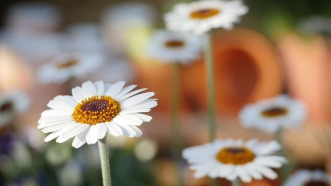 """Concorso """"Foligno in fiore"""", iscrizioni fino al 30 aprile"""