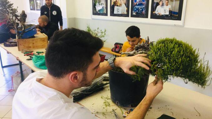 Trevi, bonsai open day conquista i partecipanti, grande successo