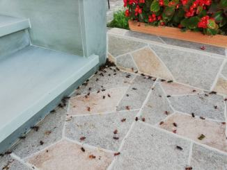 Sindaco Zuccarini convoca assemblea a Budino su problema coleotteri
