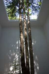 building-w-tree-inside