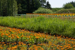 marigolds-and-pattern