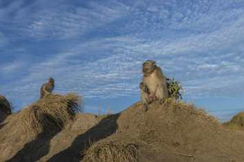 Batur Affen 2