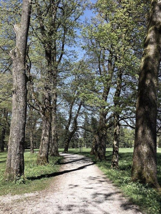 Forest-Bathing-Hellbrunn-1