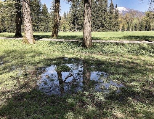 Forest-Bathing-Hellbrunn-10