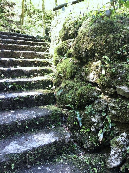 Forest-Bathing-Hellbrunn-8