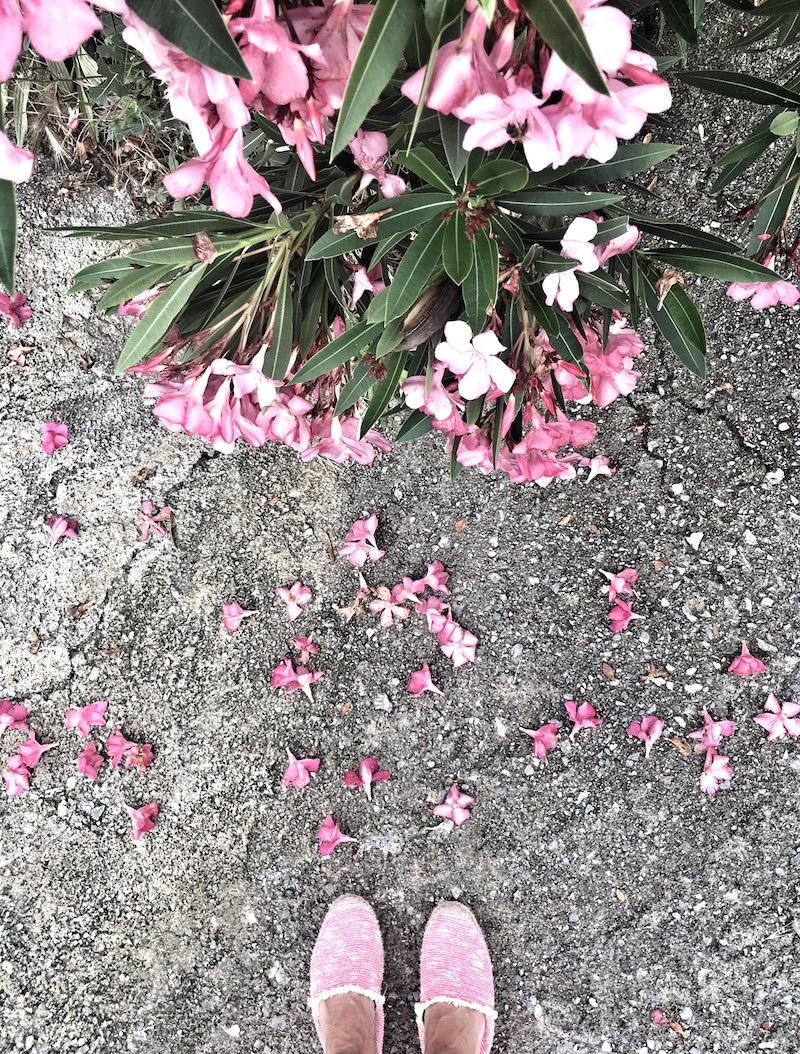 Oleander im Regen