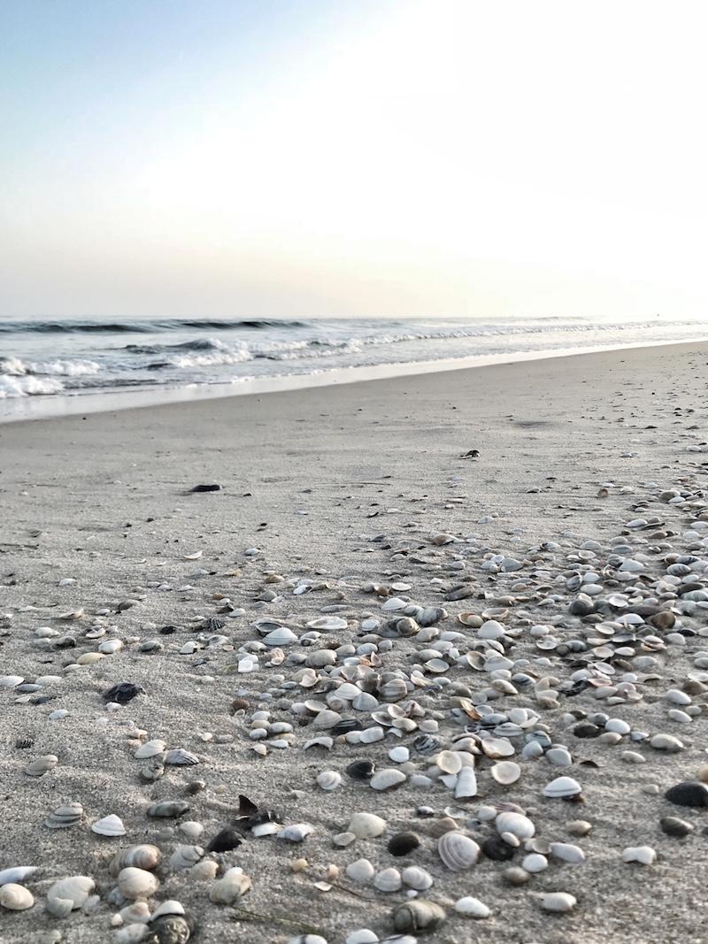 Muscheln Strand Algarve