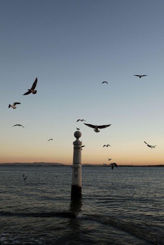 sunset_gulls_lisbon