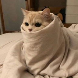 Purrito cat wrapped in a blanket
