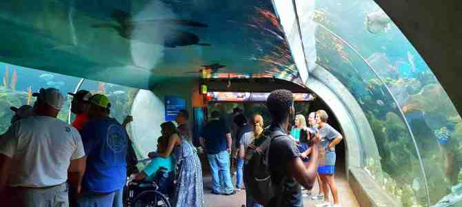 You Don't Need Kids To Have Fun At The Florida Aquarium