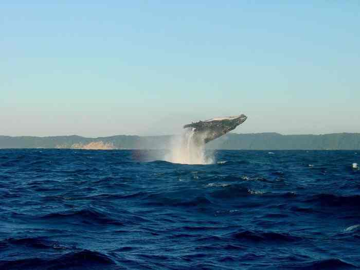 whales in iceland and whale watching tours in iceland