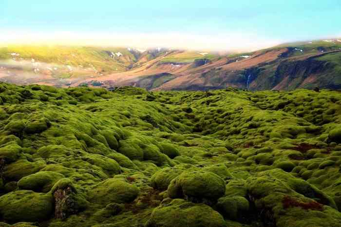 moss photography in iceland