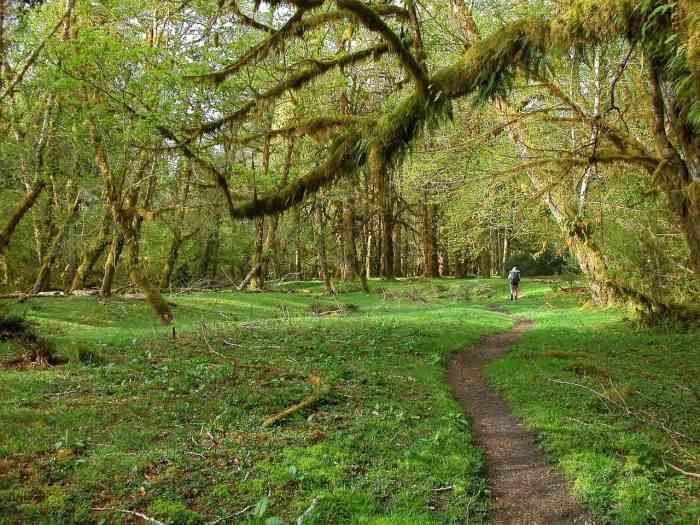 hoh rainforest is a great west coast usa destination
