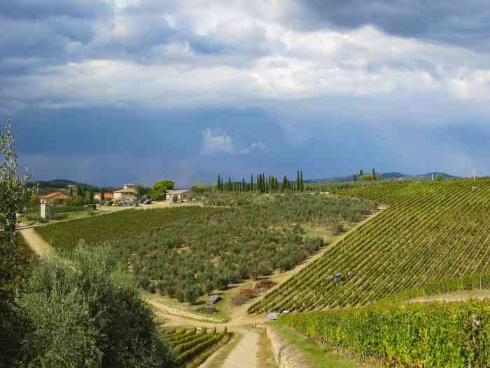 Wine tours in Tuscany will show you the best the region has to offer