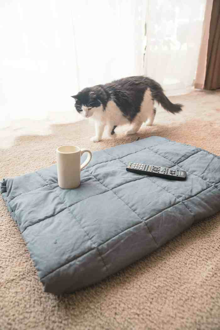 Kitten with a weighted blanket for adults