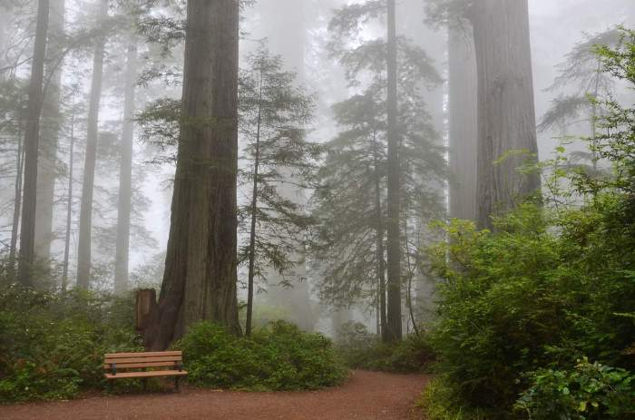 the redwoods are a stunning west coast usa destination