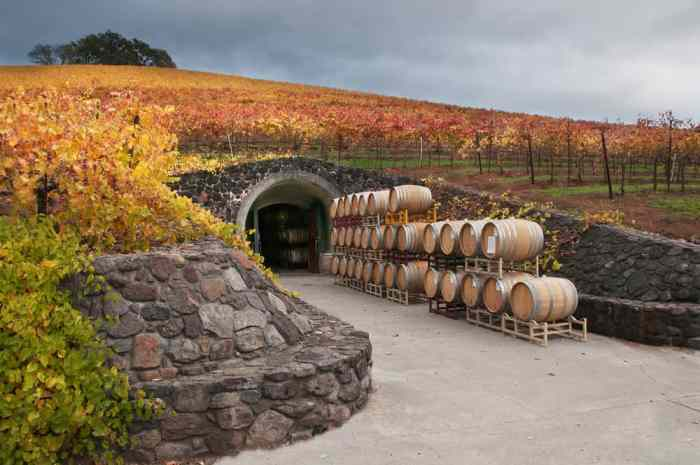 Enjoy seeing a wine cave on this San Francisco wine tour to Sonoma county