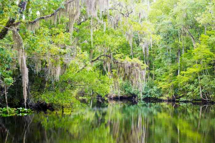 In The Age Of Over-Tourism, Why Don't We Talk About Florida?