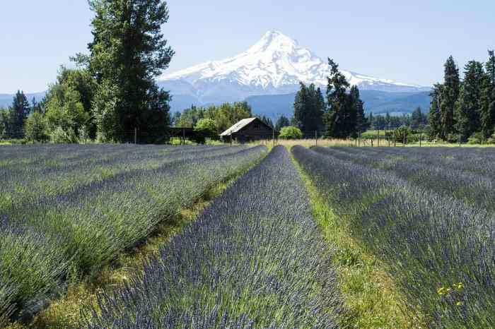 Explore Mount Hood For Some Memorable Oregon Road Trip Views