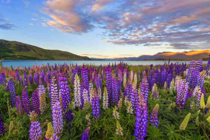 Lake Tekapo Offers Stunning Year-Round Views on your New Zealand South Island itinerary
