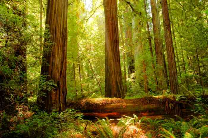 giant redwoods on your west coast road trip
