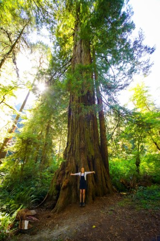 Little Dee and Big Redwood Trees