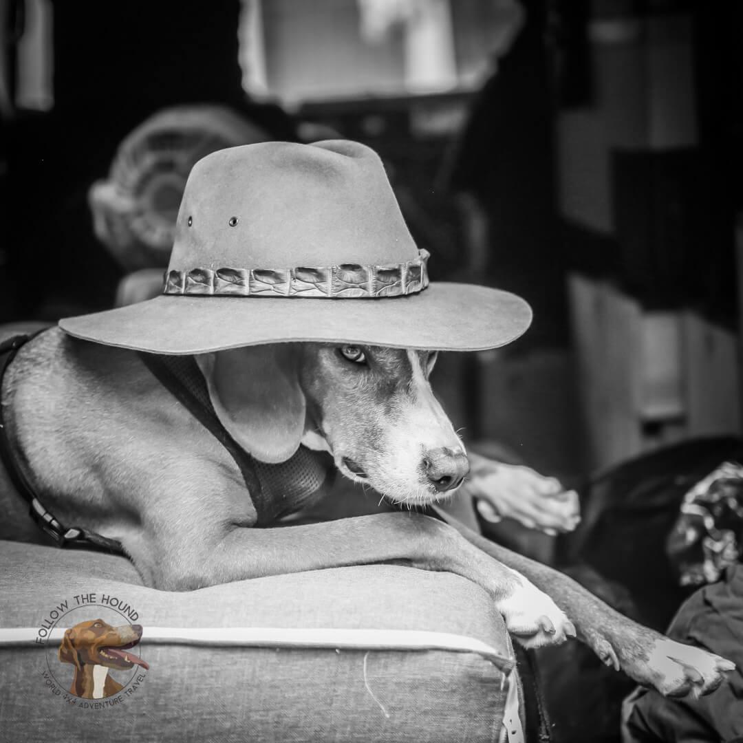 Chilled Hound Dog