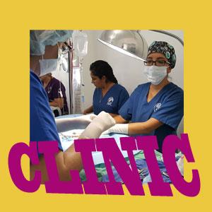 spay/neuter clinic