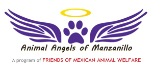 Animal Angels of Manzanillo, animal outreach helping animals