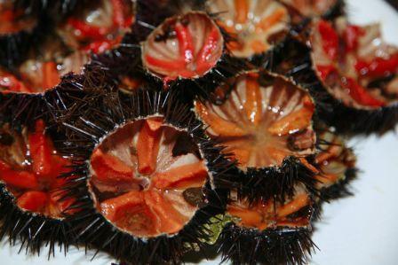 I ricci di mare, gustosissima pietanza del Salento