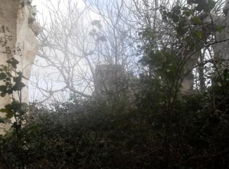 Vegetazione spontanea che ha invaso l_interno della chiesa (foto Romualdo Rossetti)