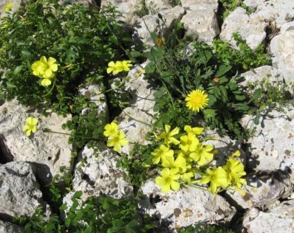 Acetosella ovvero prima o poi la primavera arriva