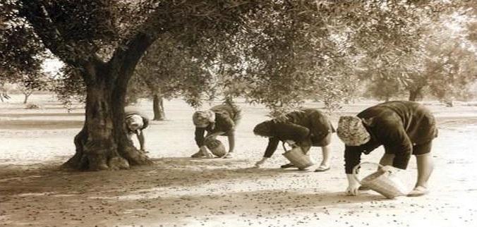 immagine tratta da http://www.vizionario.it/la-raccolta-delle-olive-nel-salento/
