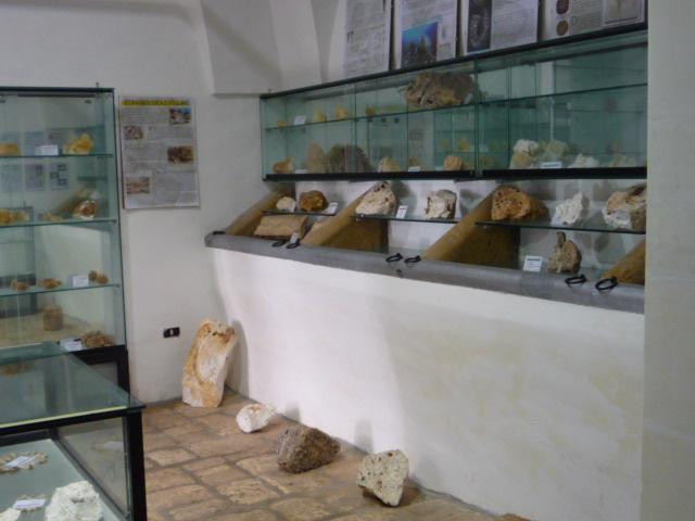 La collezione dei fossili di Pippi Ciullo a Vitigliano