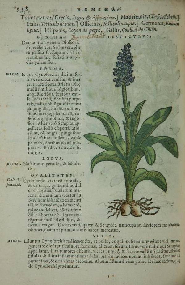 L' erba concordia e l'erba discordia nella leggenda e nella magia popolare (orchidee e legamenti amorosi)