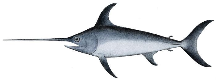 El pez espada puede contener mucho mercurio