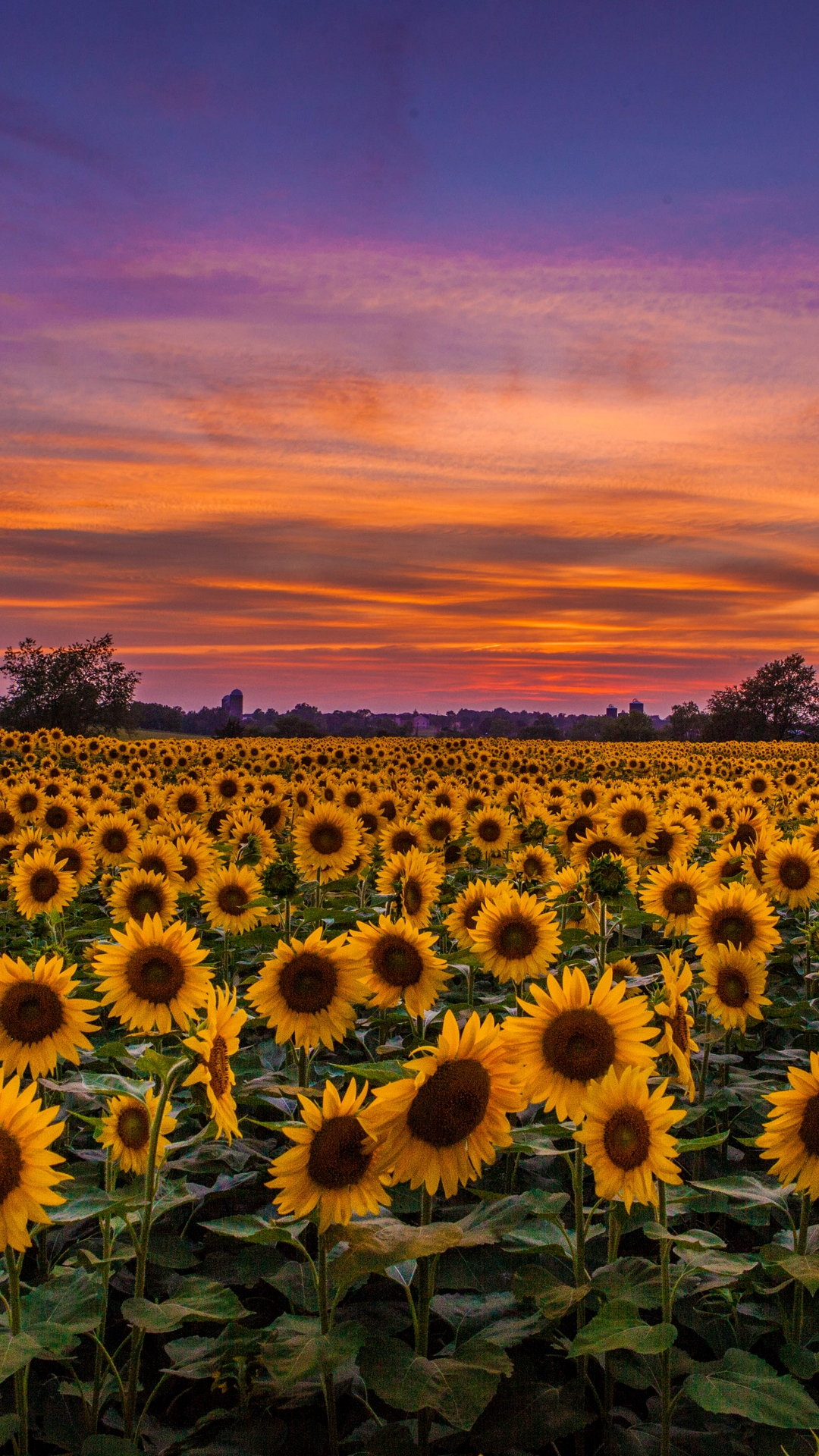 Download car iphone wallpaper in hd best collection for free and set as wallpaper for your apple iphone x, iphone xs home screen … Sunflowers Field Sunset Wallpaper - 1080x1920