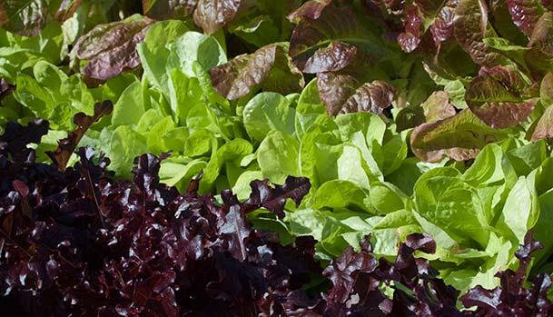Forskellige salater