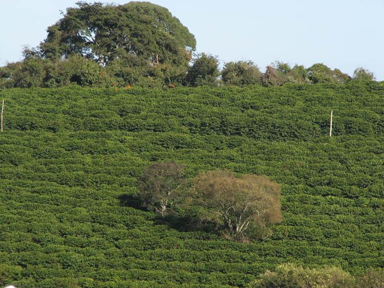 Fazenda Samambaia_Brasile