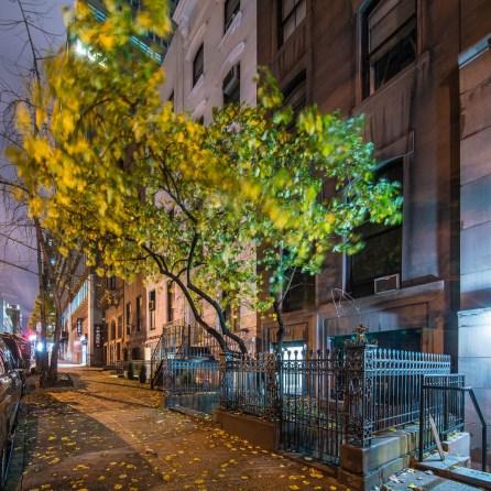 Straßenszene mit Ahornbaum East 39th Street