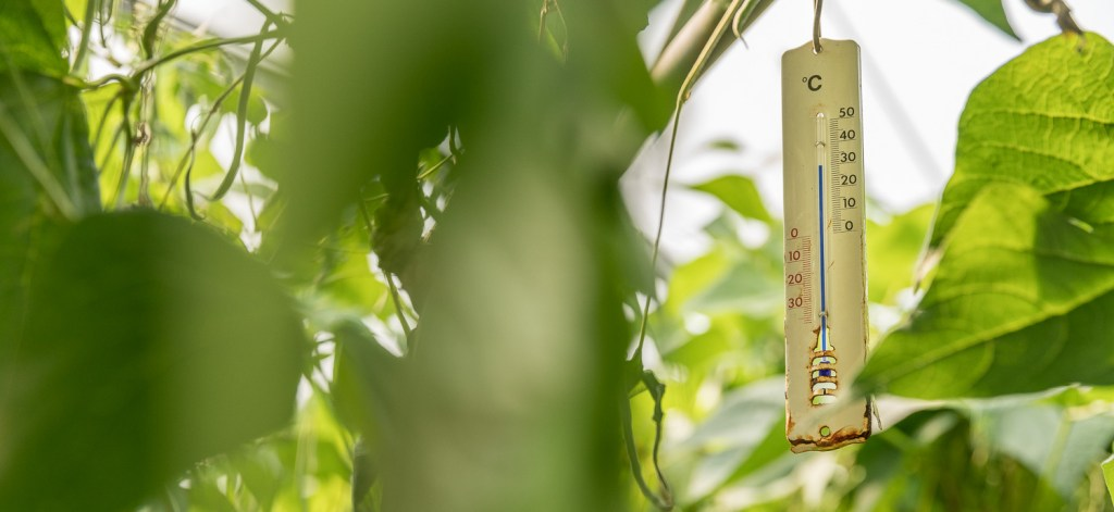 Thermometer im Gewächshaus
