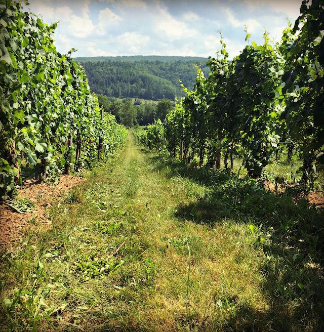 Canadian Wine Spotlight | Benjamin Bridge Winery