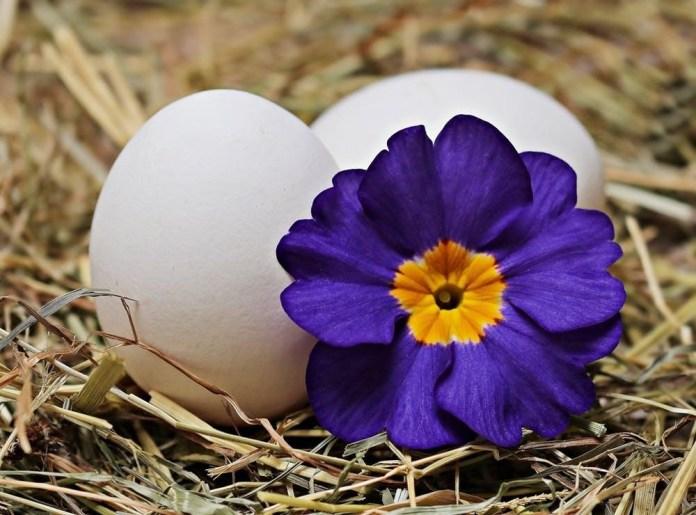 Eggs in Tortilla Flowers