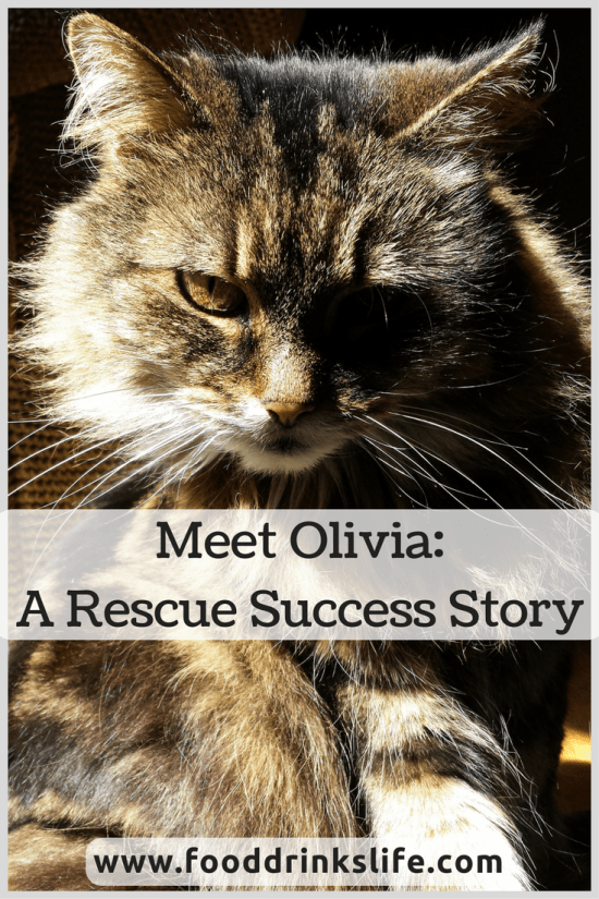 Meet Olivia: a Rescue Success Story | Food Drinks Life