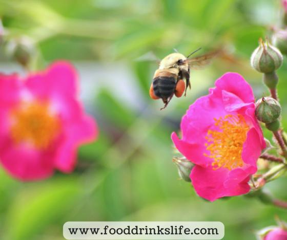 Why do I blog? | Food Drinks Life