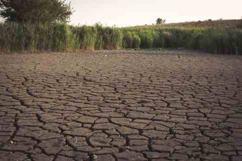 More than four provinces in South Africa are facing severe drought conditions.